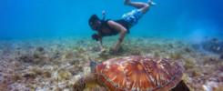 Catalina Island Snorkel