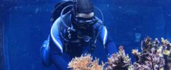 Búvárkodás – PADI OWD Open Water Diver oktatás