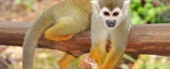 monkeyland monkies Dominican Republic