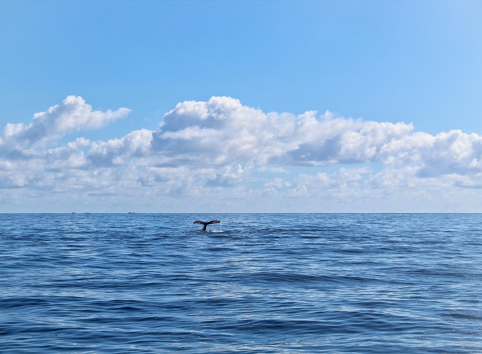 In Dominica whale season started