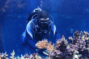Potápanie - PADI OWD Open Water Diver Training