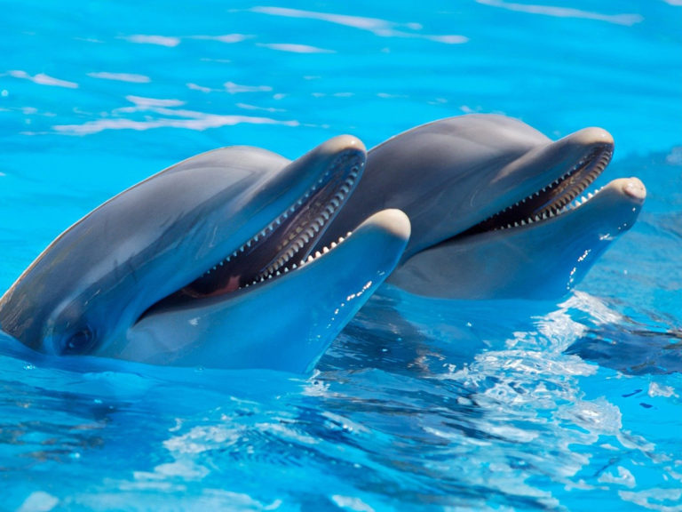 Plávanie s delfínmi